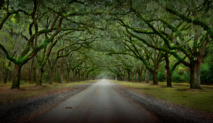 Oak lined drive to Wormsloe Plantation