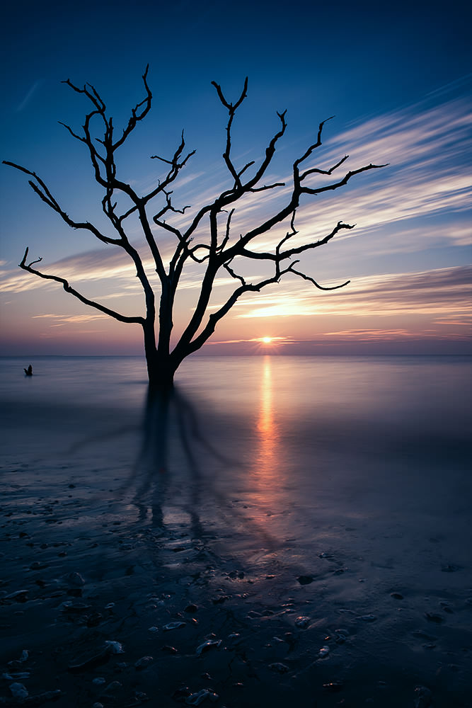 Lone tree in the ocean at sunrise