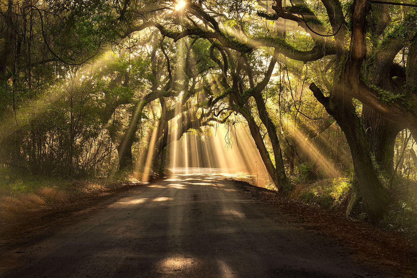Light streams through trees on a southern road