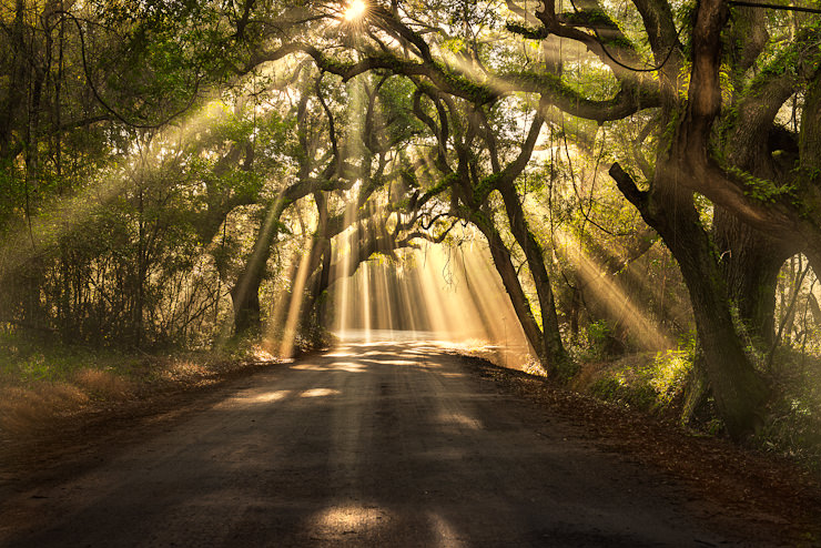 Botany Bay Light Rays, Edisto Island, South Carolina